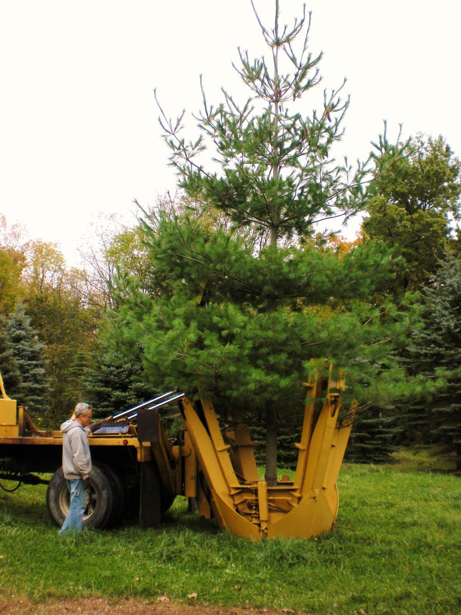 Tree_moving_1